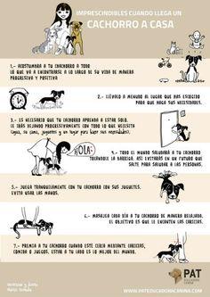 infografia cachorro