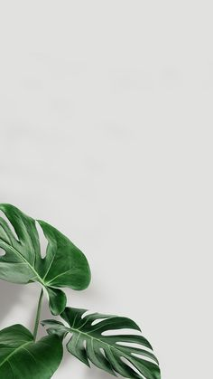 Minimal Wallpaper, Aesthetic Pastel Wallpaper, Aesthetic Backgrounds, Aesthetic Wallpapers, Iphone Wallpaper Plants, Green Wallpaper, Iphone Background Wallpaper, Plant Aesthetic, Nature Aesthetic