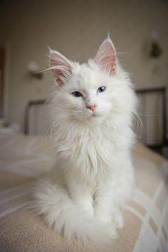 So Cute @cutencats