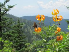 Read about Hiking on the A.T. in Smoky Mountains National Park from Clingman's Dome to Double Springs Gap. A beautiful Appalachian Trail Day hike near Gatlinburg!