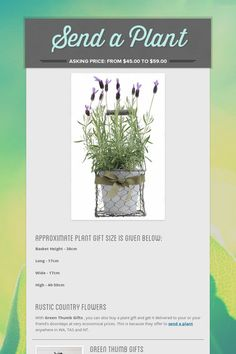 Send a Plant Plants Online, Flower Delivery, Herbs, Green, Flowers, Gifts, Presents, Florals, Herb