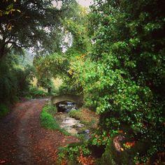 Hoy hemos revisado la Ruta de Senderismo que haremos el próximo domingo, pero la hemos hecho en bici, bajo la lluvia otoñal... ¿Aún no lo tienes claro? Mira los paisajes que vas a disfrutar. Recuerda que te puedes inscribir en www.huelvaexperiences.com/senderismo #Senderismo #Naturaleza #Deporte #Aracena #Huelva