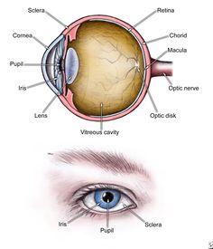ankylosing spondylitis pictures   Ankylosing Spondylitis, Ophthalmologic Perspective Causes, Symptoms ...