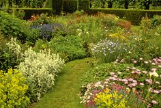 Garden Photos Grass Herbaceous Border Stachs Byzantina Flowerbed Bellflower Campanula Alchemilla Mollis Ladyõs Mantle Dianthus Pinks Flowers Delosperma