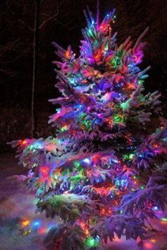 Christmas Lights - Christmas tree Light in snow / - - Your Local 14 day Weather… Christmas Scenes, Christmas Mood, Noel Christmas, Outdoor Christmas, Vintage Christmas, Country Christmas, Holiday Lights, Christmas Lights, Christmas Decorations