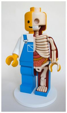 Jason Freeny's Lego Men Dissections at Street Anatomy Geek Mode, Baking Polymer Clay, Lego Sculptures, Lego Man, All Lego, Anatomy Art, Vinyl Toys, Male Figure, Inspiration For Kids