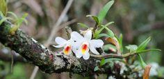 Orquídeas em vasos podem ser encontradas até em supermercados, mas árvores enfeitadas com uma dessas flores não são tão comuns. No entanto, usar um tronco como base para sua orquídea preferida pode ser m