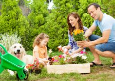 Family Fun in Gardening - Landscaping Plants Nursery Real Estate News, Plant Nursery, Get Outdoors, Family Affair, Landscaping Plants, Amazing Gardens, Fun Activities, Home And Garden, Gardening