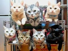 How to store and organize your cats. :)