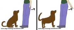 Dog Training Hand Signals - Stand: Start palm-out at the side of the hip and moves straight backwards (like an invitation to enter motion). Deaf Dog Training, Dog Training Tools, Positive Dog Training, Puppy Training Tips, Dog Sign Language, Dog Hand Signals, Pet Dogs, Dog Cat, Pet Sitting Services