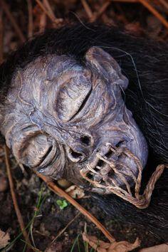 Shrunken Head Raffles By UMEToys
