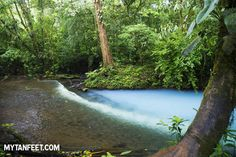 Where two rivers meet to create the stunning blue color of Rio Celeste, Costa Rica. Find out how to visit this magical place here: http://mytanfeet.com/activities/tips-visiting-rio-celeste/