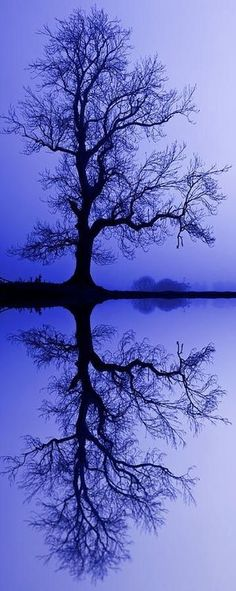 our-amazing-world:  Tree Skeleton Reflec Amazing World