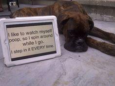 Dog shaming. hahaha