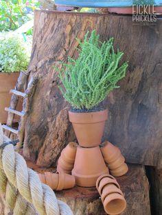 Terracotta pot man - Crassula muscosa var. muscosa Terracotta Pots, Perth, Planter Pots, Garden, Garten, Lawn And Garden, Gardens, Gardening, Outdoor