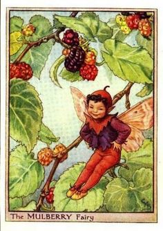 Mulberry Flower Fairy Vintage Print by Cicely Mary Barker, first published in London by Blackie, 1940 in Flower Fairies of the Trees.