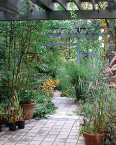 Creating a Private Haven   Fine Gardening