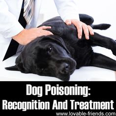 Dog Poisoning: Recognition And Treatment