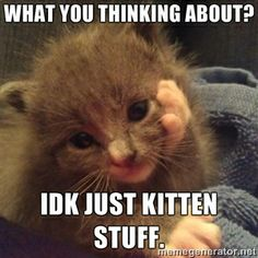 22 Funny Animal Pictures Of The Day – Funny Animals – Daily LOL Pics Funny Animal Picdump of The Day 373 Photos) awwww Cute Animal Memes, Funny Animal Quotes, Cute Funny Animals, Funny Animal Pictures, Cute Baby Animals, Funny Cute, Animal Pics, Animal Funnies, Funny Work
