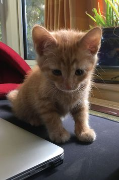 Billy The Kitten has a blog! Don't miss his story and adventures on The Happy Cat Site