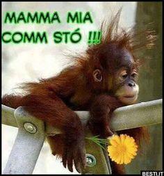 Mamma | BESTI.it - immagini divertenti, foto, barzellette, video Monkey, Animals, Mamma, Snoopy, Sarcasm, Photos, Naturaleza, Monkeys, Animales