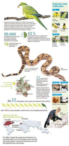 Especies animales más traficadas en Colombia http://www.eltiempo.com/multimedia/infografias/especies-animales-mas-traficadas-en-colombia/14775395