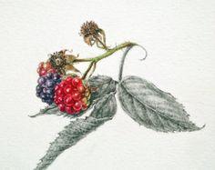 Blackberries original watercolour by Dianne Sutherland
