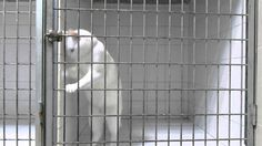 Prison Break: Cat Version Meet the Michael Scofield of cats Prison Break, Baby Animals, Funny Animals, Cute Animals, Funniest Animals, Funny Cat Videos, Funny Cats, Funny Humor, Crazy Cat Lady