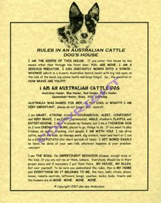 Rules in An Australian Cattle Dog's House Aussie Cattle Dog, Austrailian Cattle Dog, Cattle Dogs, Red Dog, Blue Dog, Blue Merle, Loyal Dogs, Dog Rules, Working Dogs