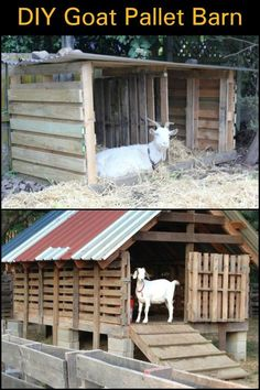 to make a goat barn from pallets! In Need of an Animal Shelter or Shed? Keep it Simple by Building One From Old PalletsIn Need of an Animal Shelter or Shed? Keep it Simple by Building One From Old Pallets Sheep Shelter, Goat Shelter, Animal Shelter, Shelter Dogs, Shelters, Animal Rescue, Cabras Boer, Goat Playground, Goat Shed