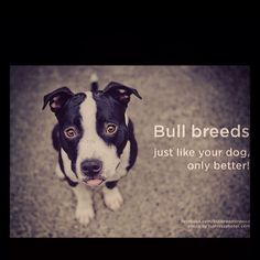 Bullies are the best!