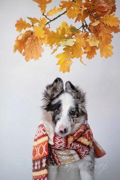 "creamacchiato: ""animalsareangels: ""  Autumn Floey by Martyna Ożóg "" """