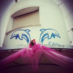 Il delfinario di #Rimini rosa! @igersemiliaromagna