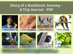 Fascinating journal entries based on an actual visit to the rainforest. Combines beautiful photographs with primary source information. Includes end-of-lesson activities, discussion questions, and a reference document. Rainforest Theme, Virtual Field Trips, Primary Sources, Journal Entries, Grade 3, Earth Day, Life Science, Photographs, Presents