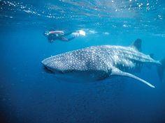 Ningaloo Reef: Tourism Western Australia.