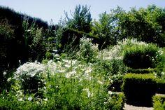 The white garden at sissinghurst Gartenpraktikum Tag 25, 21.07.2016 Es ist einer der bekanntesten Gärten überhaupt. Ein Garten dessen Leitfarbe weiss ist. Ob weiss überhaupt eine Farbe ist, da bin …