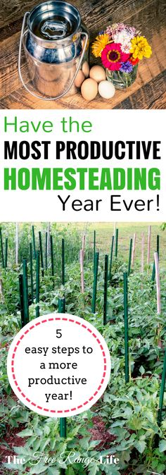 How to Have the Most Productive Homesteading Year Ever! Do you have a long list of things to accomplish on your homestead? Learn the steps to having the most productive homesteading year ever! Homestead Gardens, Farm Gardens, Homestead Survival, Survival Prepping, Survival Skills, Survival Hacks, Survival Quotes, Survival Knife, Emergency Preparedness