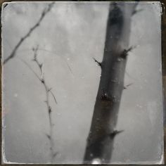 Parchment of Thorns by Jennifer Van Gilder from Black & White with Juror Roy L. Flukinger | The Center for Fine Art Photography