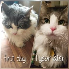Today is the one year anniversary of adopting Babushka by TaraMichelleE cats kitten catsonweb cute adorable funny sleepy animals nature kitty cutie ca