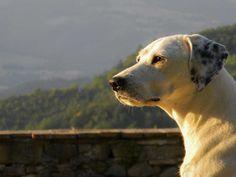 20% Rabatt als Poster: hund tiere Profil Haustiere Schnauze Schau Weiß Download auf Webseite! Kategorien: landschaften, dog, animals, profile, pets, muzzle, look, white, nature, laying, landscape