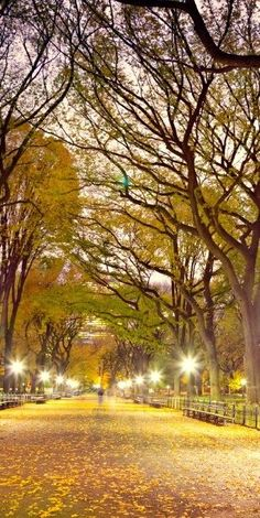 Central Park, New York City. I was here in this exact spot. I remember the trees =]