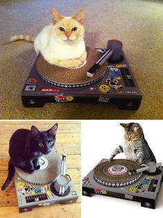 De géniaux jouets en carton pour chats  2Tout2Rien
