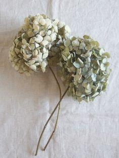 FLEURI blog|ドライフラワー紫陽花 dryflower