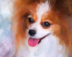 97 Best Best Papillon Dog Photos Images Papillon Dog Little