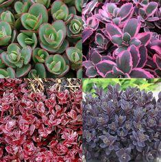 KOLEKCE ROZCHODNÍKŮ SUNSPARKLER   Lukon bulbs Bulbs, Succulents, Garden, Plants, Lightbulbs, Garten, Lawn And Garden, Bulb, Succulent Plants