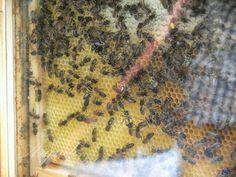 Rico panal de miel