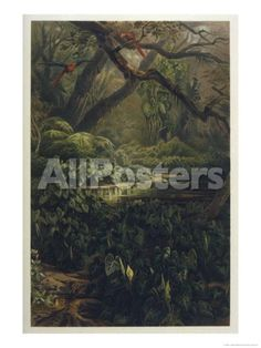Xanthosoma and Other Exotic Flora and Birds in the Brazilian Jungle by J. Selleny Landscapes Giclee Print - 46 x 61 cm