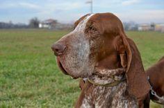 È  stato scelto tra 160 esemplari il cane del reggiano Andrea Vaccari