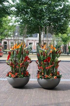 Strelitzia arrangement with Strelitzia's of Holland Strelitzia and made by Valentijn Sneek