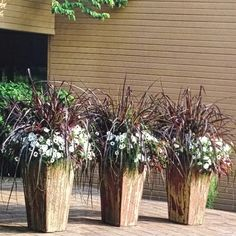 Graceful Grasses Vertigo with White Supertunia by Proven Winners Balcony Planters, White Planters, Outdoor Planters, Container Flowers, Container Plants, Container Gardening, Small Yard Landscaping, Outside Plants, Shade Flowers